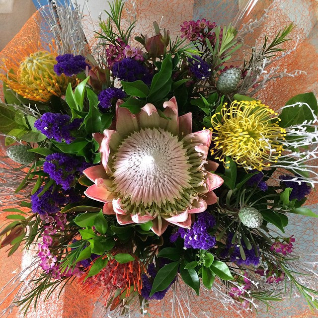 king proteus, spider mums, stock